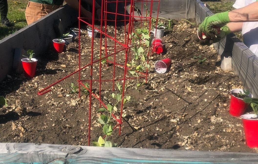 Planting Day 2021